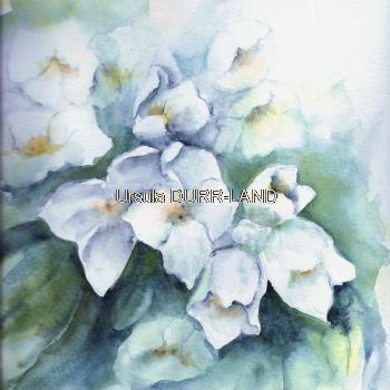 N° 182 Tapis floral